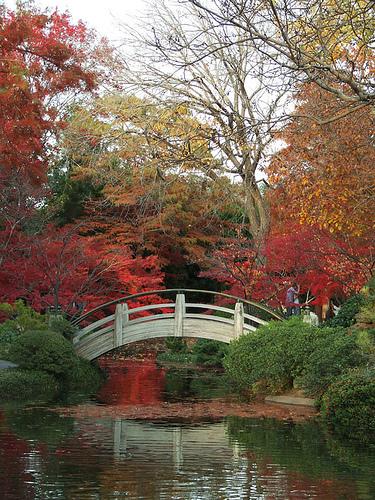 Jap garden