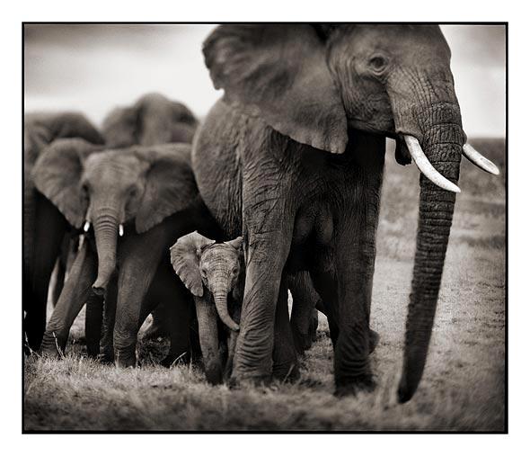 024_Elephant-Mother-%26-2-Bab
