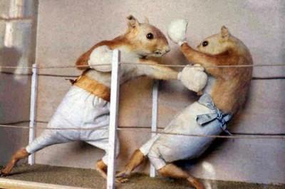 Squirrel_Boxing