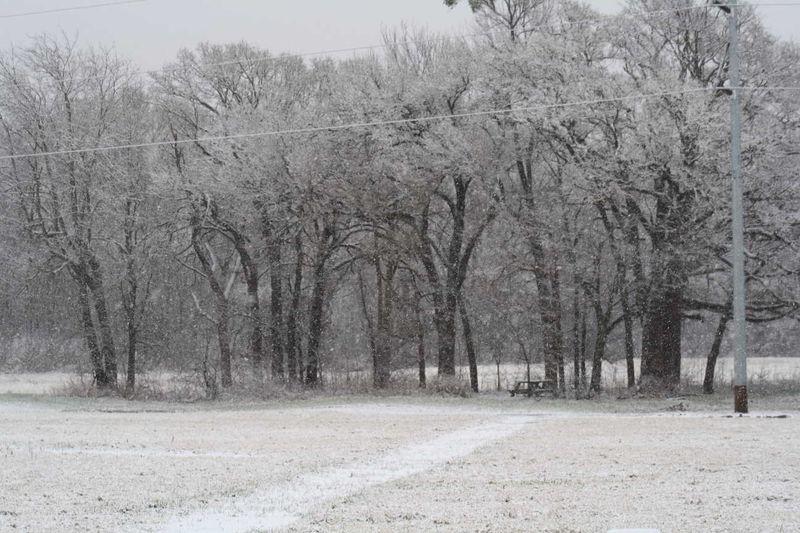 Snowoakgrove