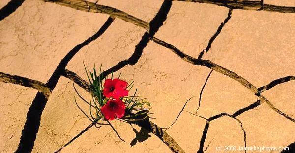 600_06-Desert_Flower