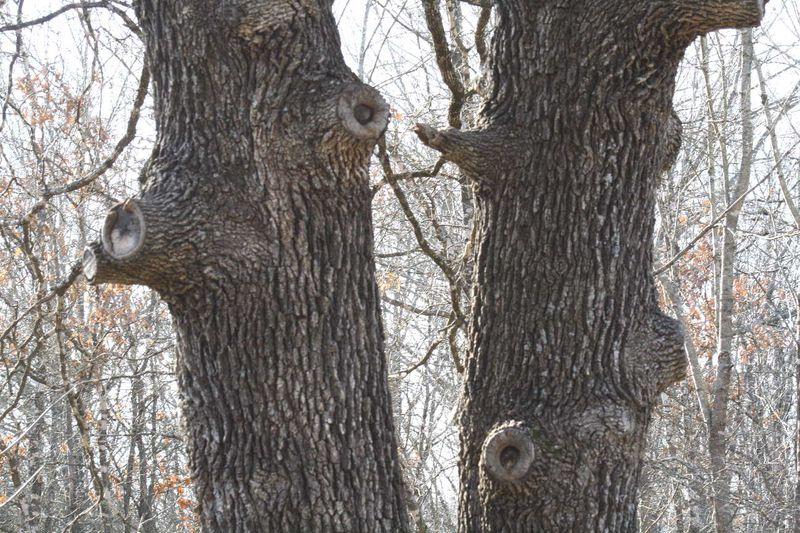 SPring WizofOzTrees