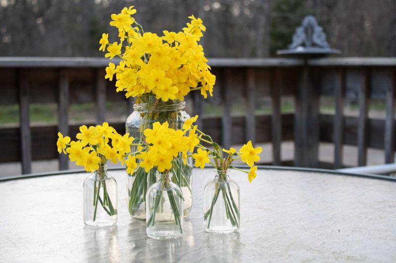 YellowFlowers1