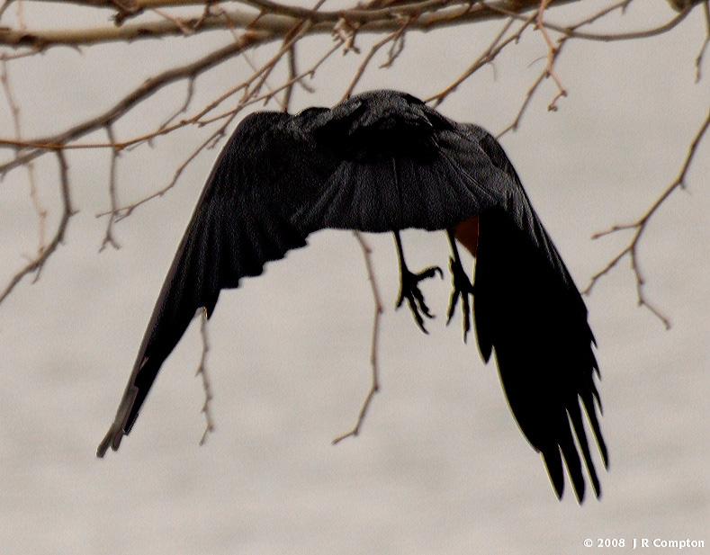 J208036-same-crow-fly