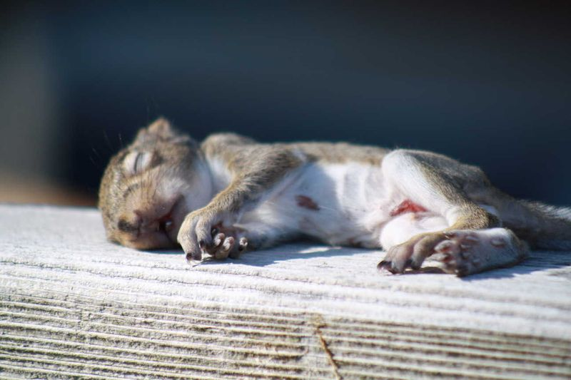 Spring Squirrel 2