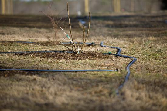 Drip-irrigation1