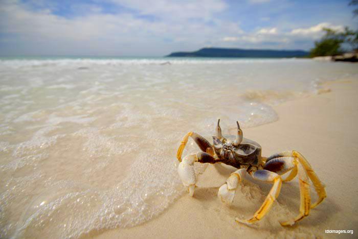 Crab-beach