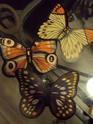 Jar6butterfly