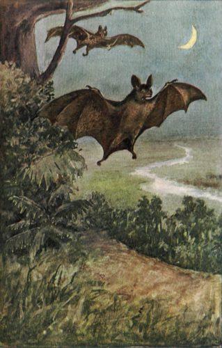 Bat-t