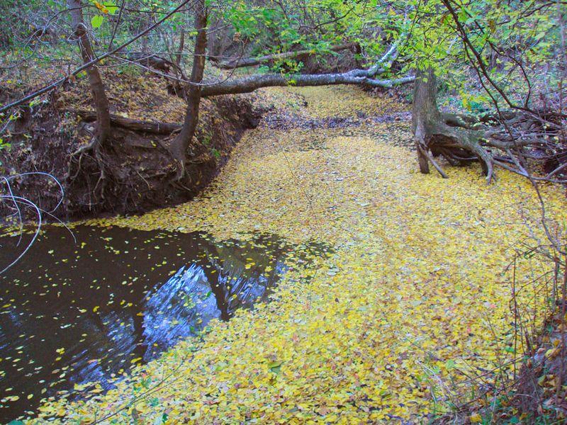 AutumnTurkeyCreek