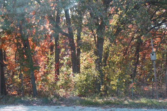 AutumnWindow