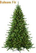 Balsam-Fir-Christmas-tree-