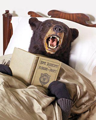 Bear-1011mld107873_xl