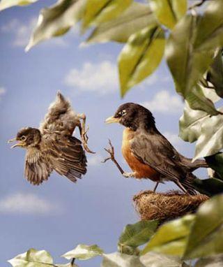 Animals_kicking_bird_out_of_nest_dr-com1