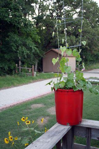 Potsunflower