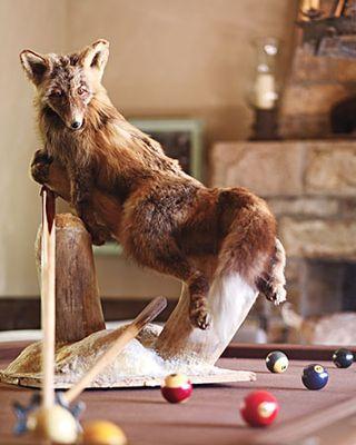 Fox-taxidermy-1011mld106418_xl