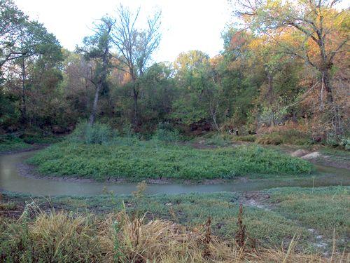 FallSwamp