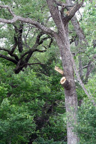 TreeCut2