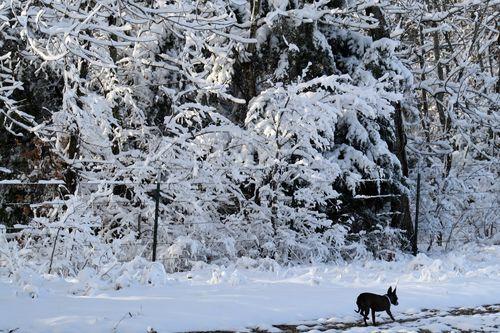 SnowMooskies