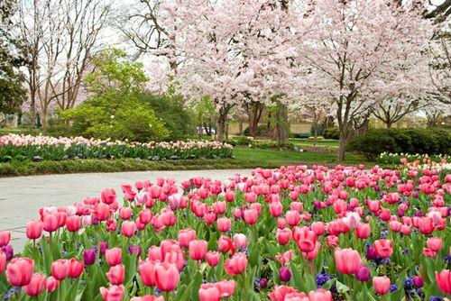 Dallas-arboretum-dallas-blooms