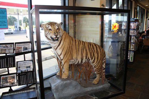 TigerInTheBox