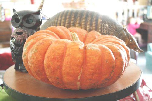 PumpkinROund