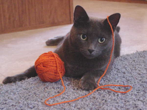 Clyde & Orange Yarn 2