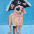 Pirate Dog 1a
