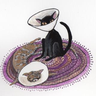 Cats in Cones square