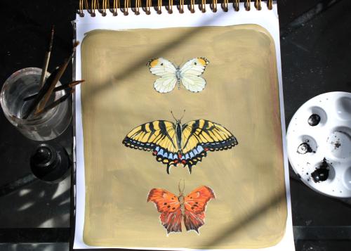 ButterflyTop