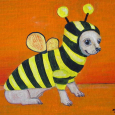 Bumblebee Chihuahua 1a