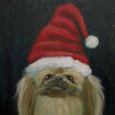 Pekingese in Red Hat Large