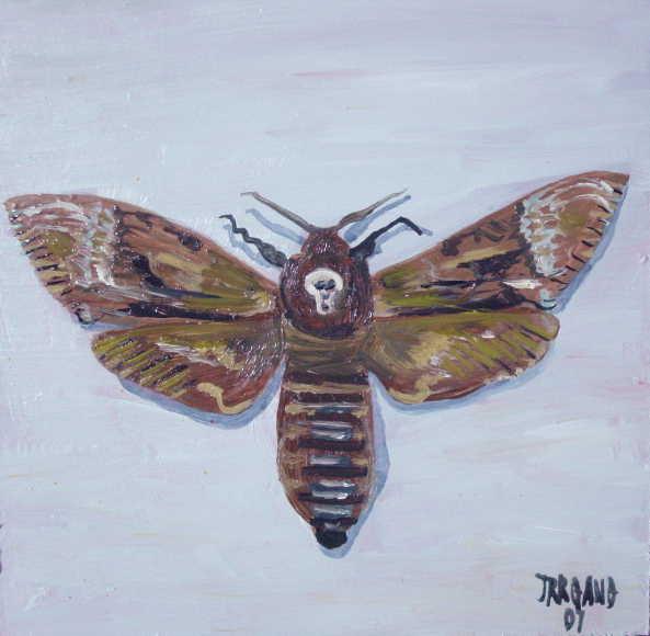 Death's Head Moth 1a