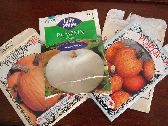 Pumpkinseedsblog_4