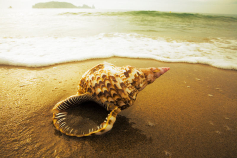 Conch20shell20on20beach20photo