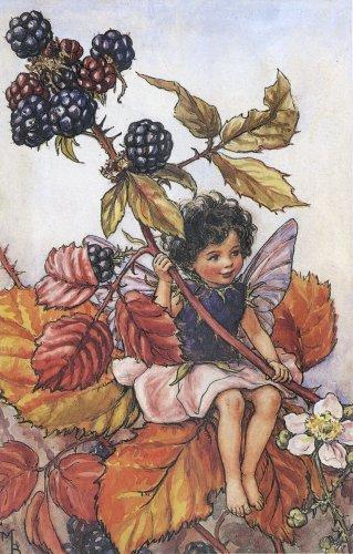 Blackberry_fairy